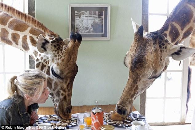 As girafas ficam em casa neste hotel! 2