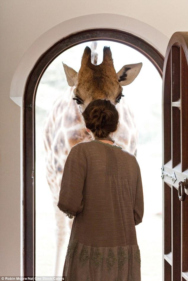 As girafas ficam em casa neste hotel! 3