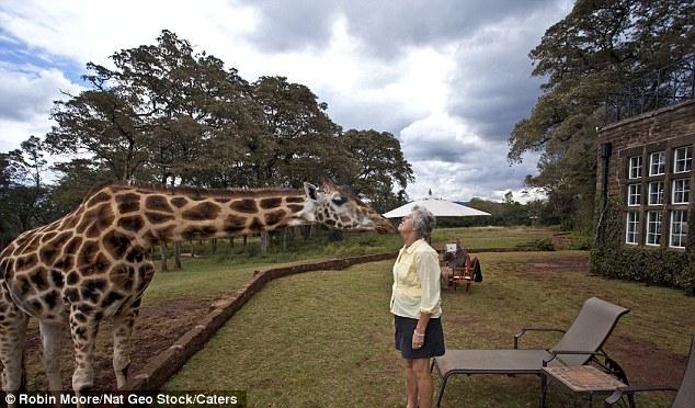 As girafas ficam em casa neste hotel! 5