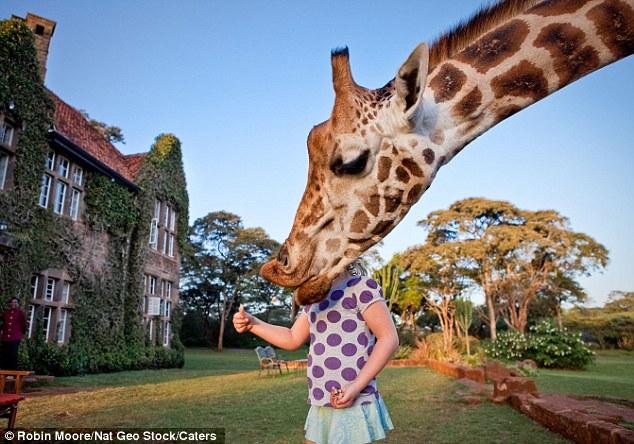 As girafas ficam em casa neste hotel! 6