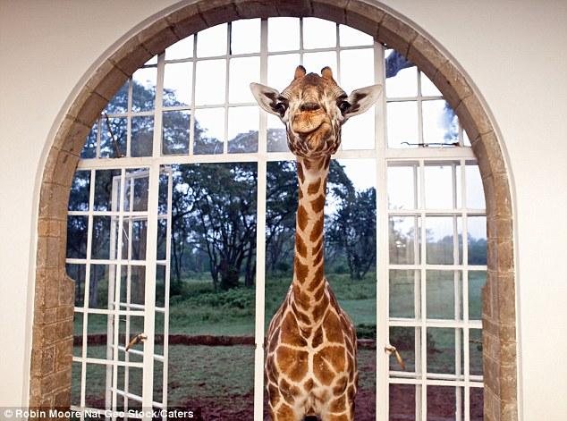 As girafas ficam em casa neste hotel!