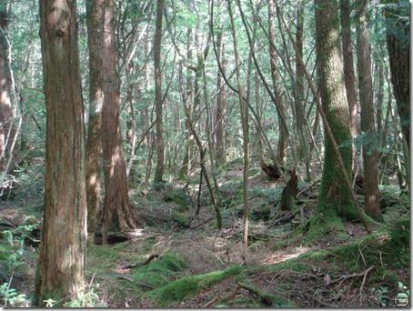 Floresta Aokigahara, Japão