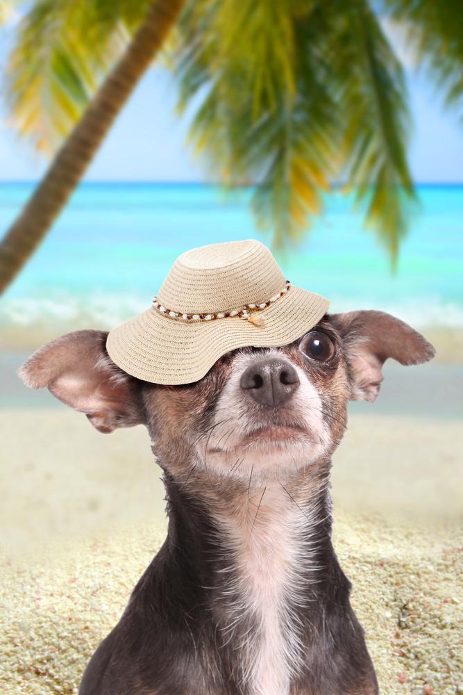 Cães e gatos também terão passaporte! 0