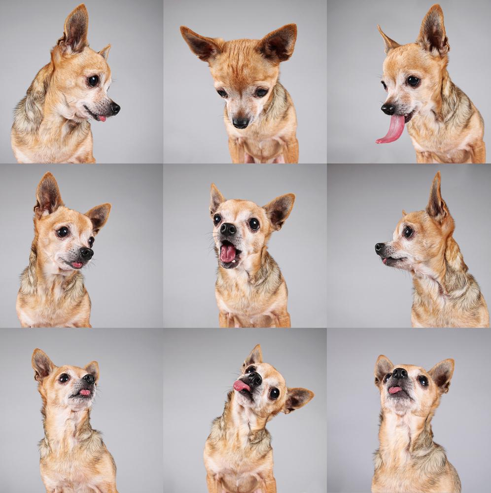 Cães e gatos também terão passaporte! 1