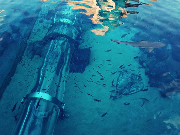 Conheça o tobogã construído em um tanque com tubarões!11