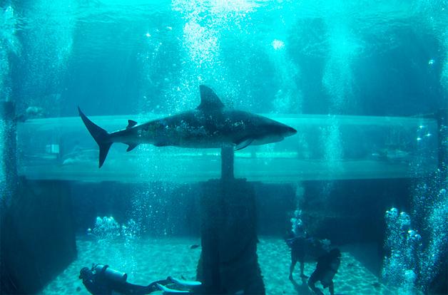 Conheça o tobogã construído em um tanque com tubarões!13