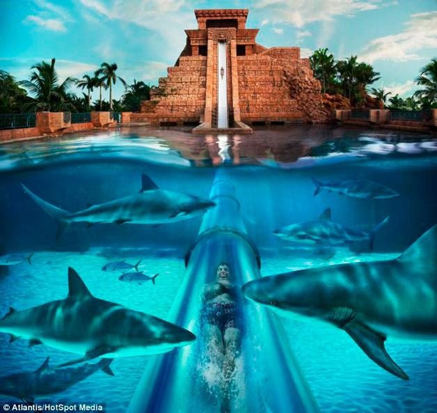 Conheça o tobogã construído em um tanque com tubarões!5