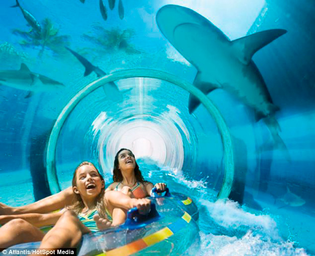 Conheça o tobogã construído em um tanque com tubarões!6