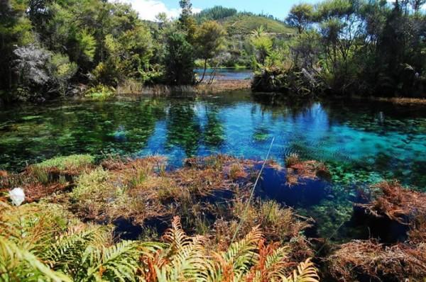 Pupu Springs (Nova Zelândia)