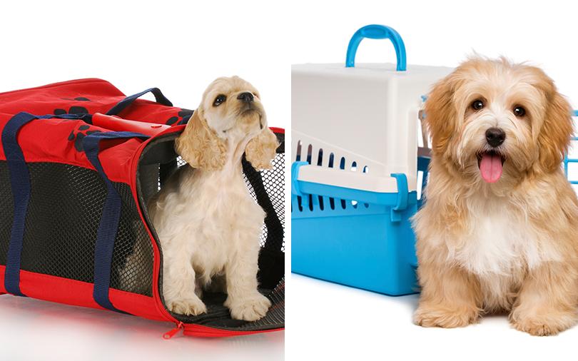 caixa-de-transporte-para-animais