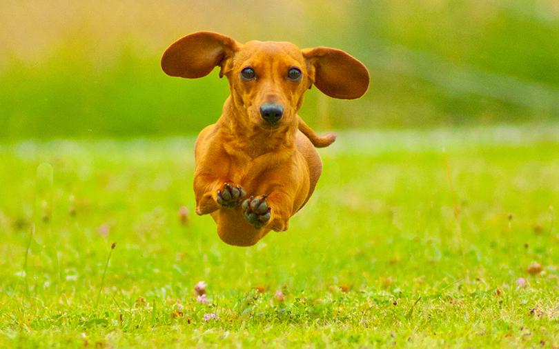 Frases Com Animais De Estimação Para Facebook: Viagem Com Animais De Estimação: Confira Os Documentos